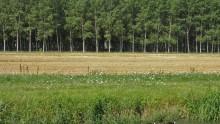 Per le foreste urbane lombarde arriva un 'inventario'