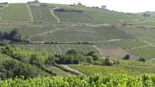 I prezzi dei terreni agricoli in Italia continuano a scendere