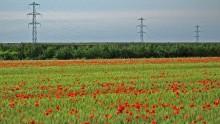 Sicurezza sui cantieri della rete elettrica: Terna e Anie adottano procedure comuni