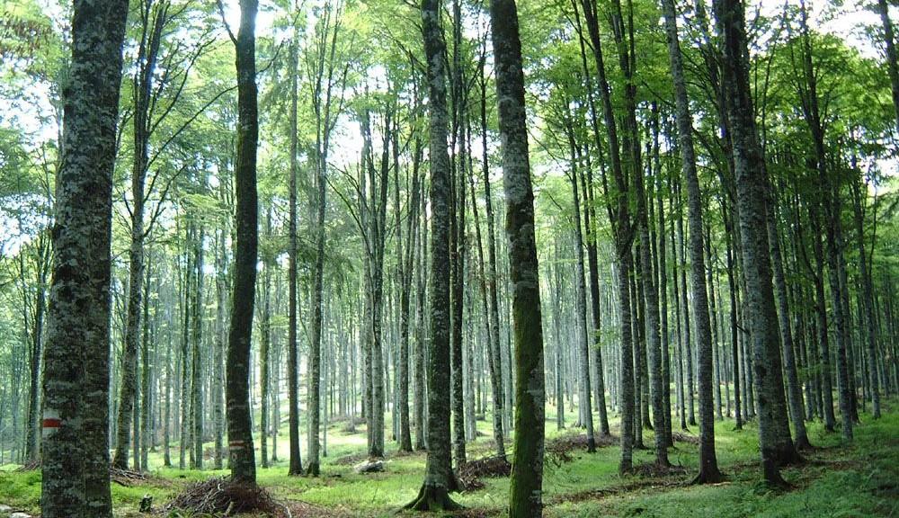 wpid-8742_foresta.jpg