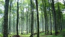 Stop alla deforestazione entro il 2020