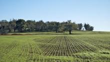 Imu su terreni agricoli: il Tesoro risponde