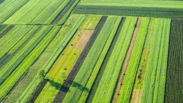 Mercato fondiario, il prezzo della terra cala per il 4° anno consecutivo